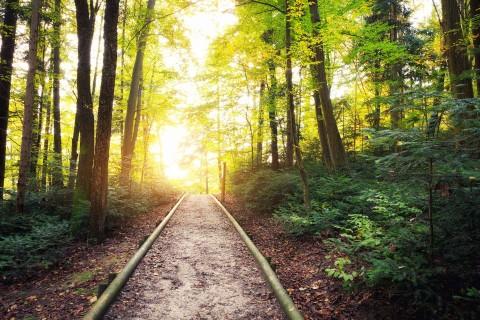 ein sonniger Waldweg
