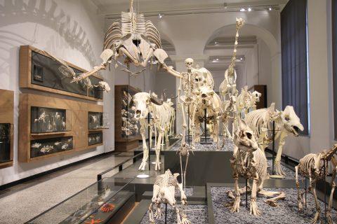Skelette im HLM