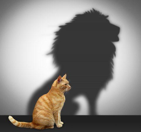 Katze mit Schatten eines Löwen