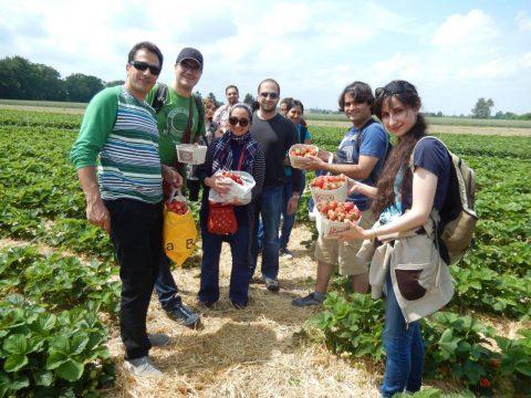 Studierende mit beim Erdbeer-Pflücken