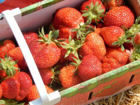 Schale mit Erdbeeren