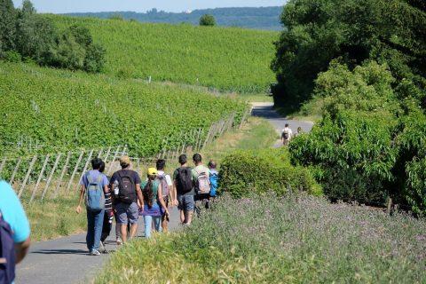 Wanderung durchs Rheingau