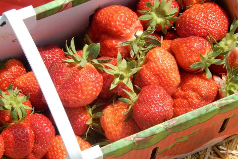 Erdbeeren Pflücken Mainz